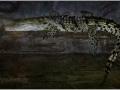 Гребнистый крокодил или Австралийский крокодил салтватера, индо-тихоокеанский крокодил . (Crocodylus porosus)
