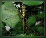 Фото альбом стрекозы