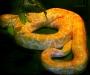 Альбом Змеи