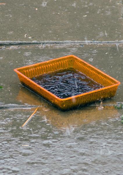 Не стал заморачиваться с подготовкой воды, просто выставил кювету с торфом под дождь.