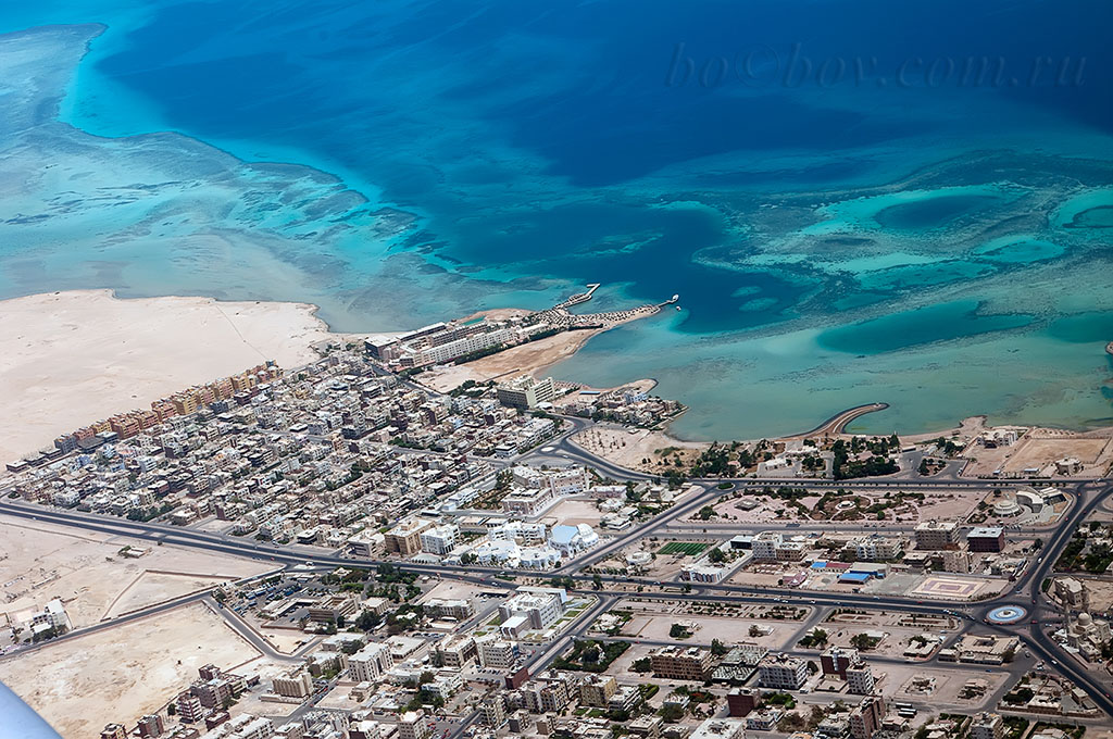 Хургада. Животный мир отеля Sonesta Pharaoh Beach.